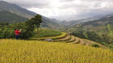 Fantastic terrace rice fields in October