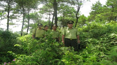Forest rangers under threat