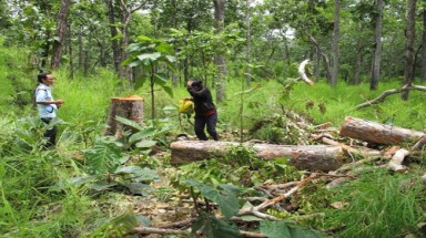 Relevant ministries keep arguing about forest development fund