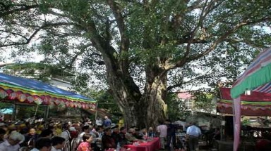 300-year banyan in Hanoi recognised as Vietnam Heritage Tree