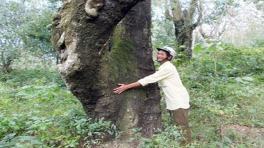 """The """"guardian forest"""" of Quang Nam's people"""