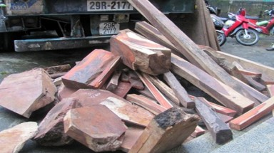 Rare, precious wood found on a lorry