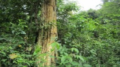 Dau Tieng protective forest in danger