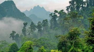 Vietnam keen to develop special-use forest