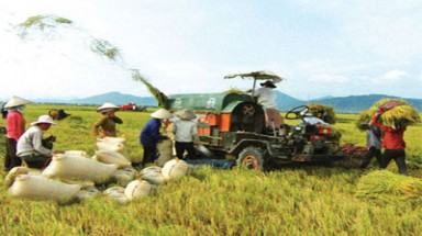 Vietnam, Ireland agree to cooperate on agricultural development