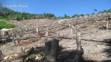 Deforestation destroys watershed in Khanh Hoa province