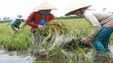 Thua Thien Hue Province: VND 2 billion to strengthen capacity to respond to climate change