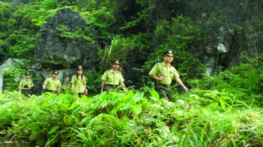 Approving agreements to sponsor two sustainable forest management projects