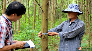 FURTHER CERTIFICATION SUCCESS FOR QUANG TRI SMALLHOLDERS