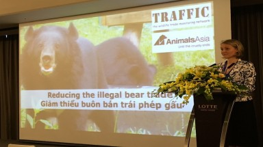 Viet Nam's illegal bear trade persisting more than a decade after ban imposed