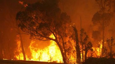 Climate change drives up risk of bushfire in Australia: report