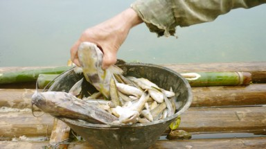 Thanh Hoa: Fish die en masse on Buoi River upstream