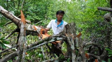 Rangers collude in destruction of Vietnam's protected wetland: official