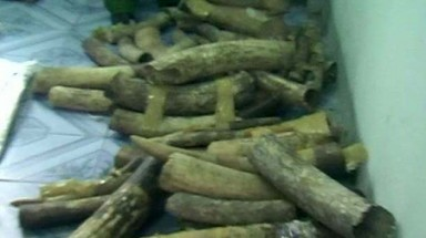 Vietnam's seized ivory waits to be sold, stolen or what?