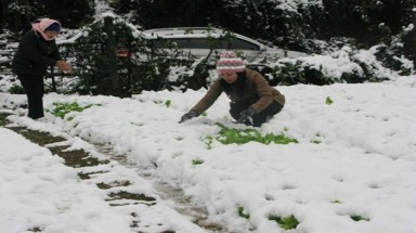 Sa Pa snowfall damages farms