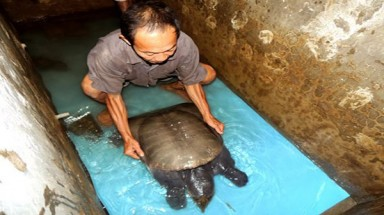 Southern fisherman catches giant southern turtle