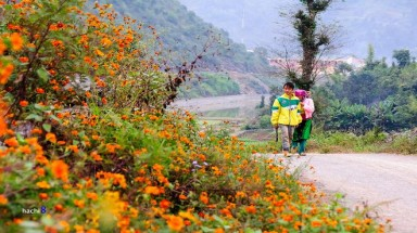 Brilliant colors of flowers on the Rock Plateau of Ha Giang